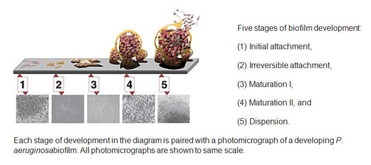 food-ozone-process